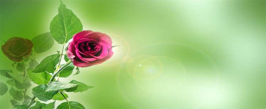 overrask hende med blomster i form af et gavekort