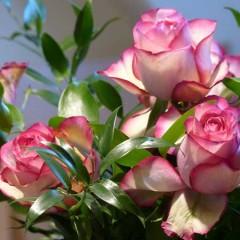 Giv et gavekort til blomster som den søde gave til hende