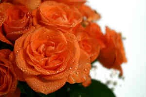 giv hende en buket smukke blomster
